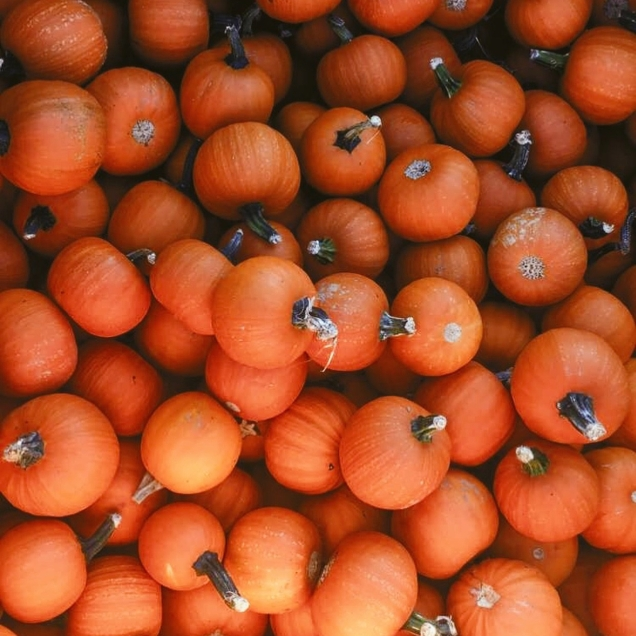 """""""My favorite thing about fall is picking and carving pumpkins with friends 😊❤️"""" -@Alison_faith99"""